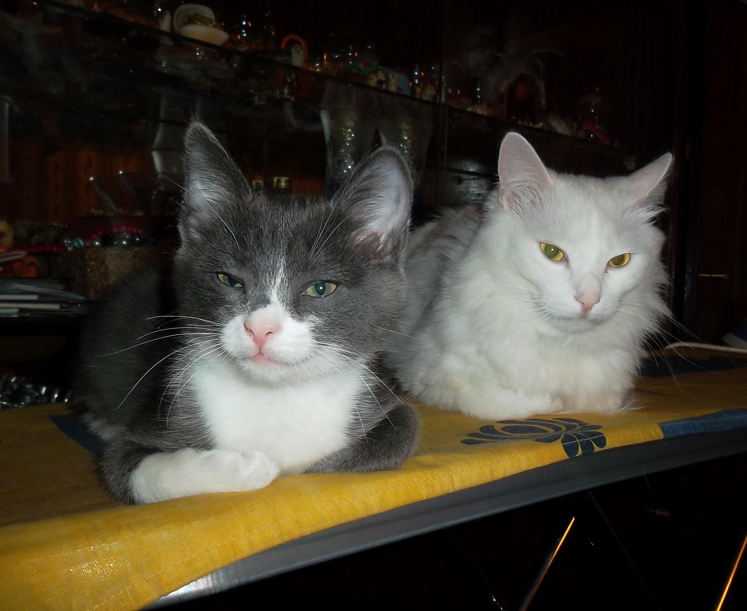 Завела двоих котов...  Да, погоряч...