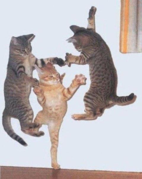 Весёлые коты для поднятия настроения)