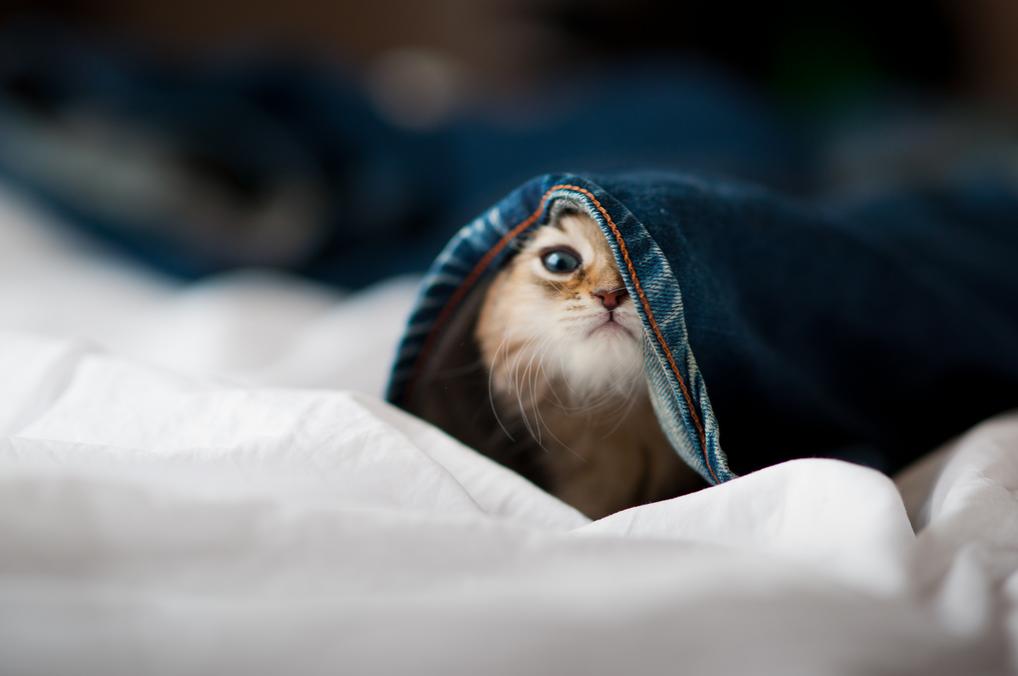 Забавный рыжий котенок   www.osobe...