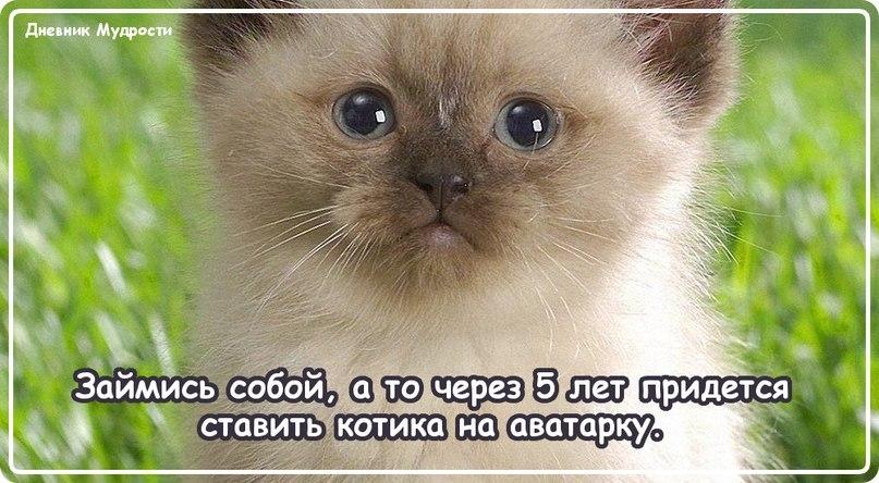 ололошка)