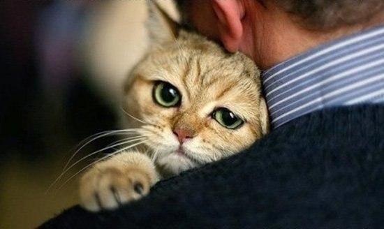 По статистике, любители кошек обра...