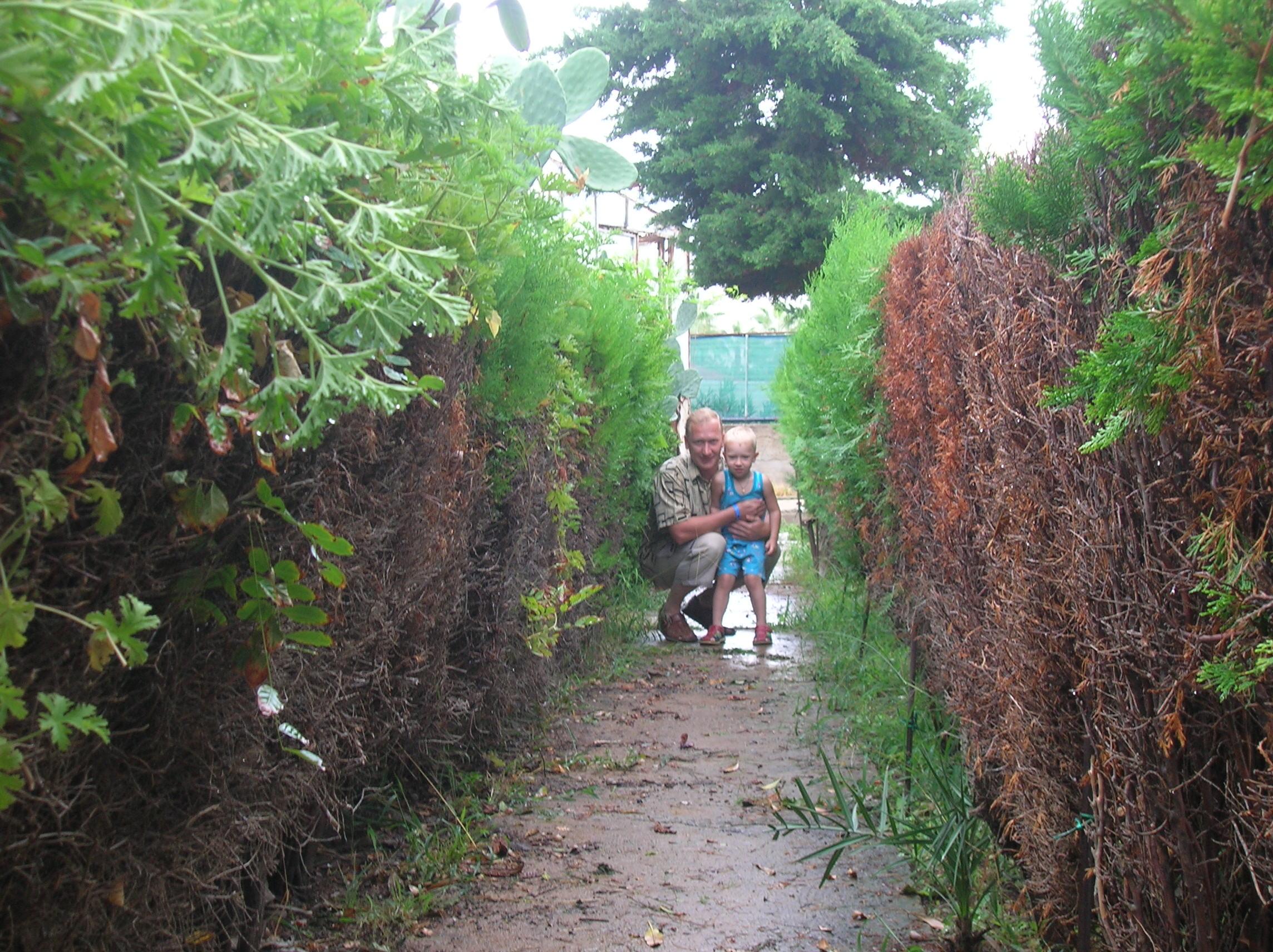 В зеленом заборчике :)