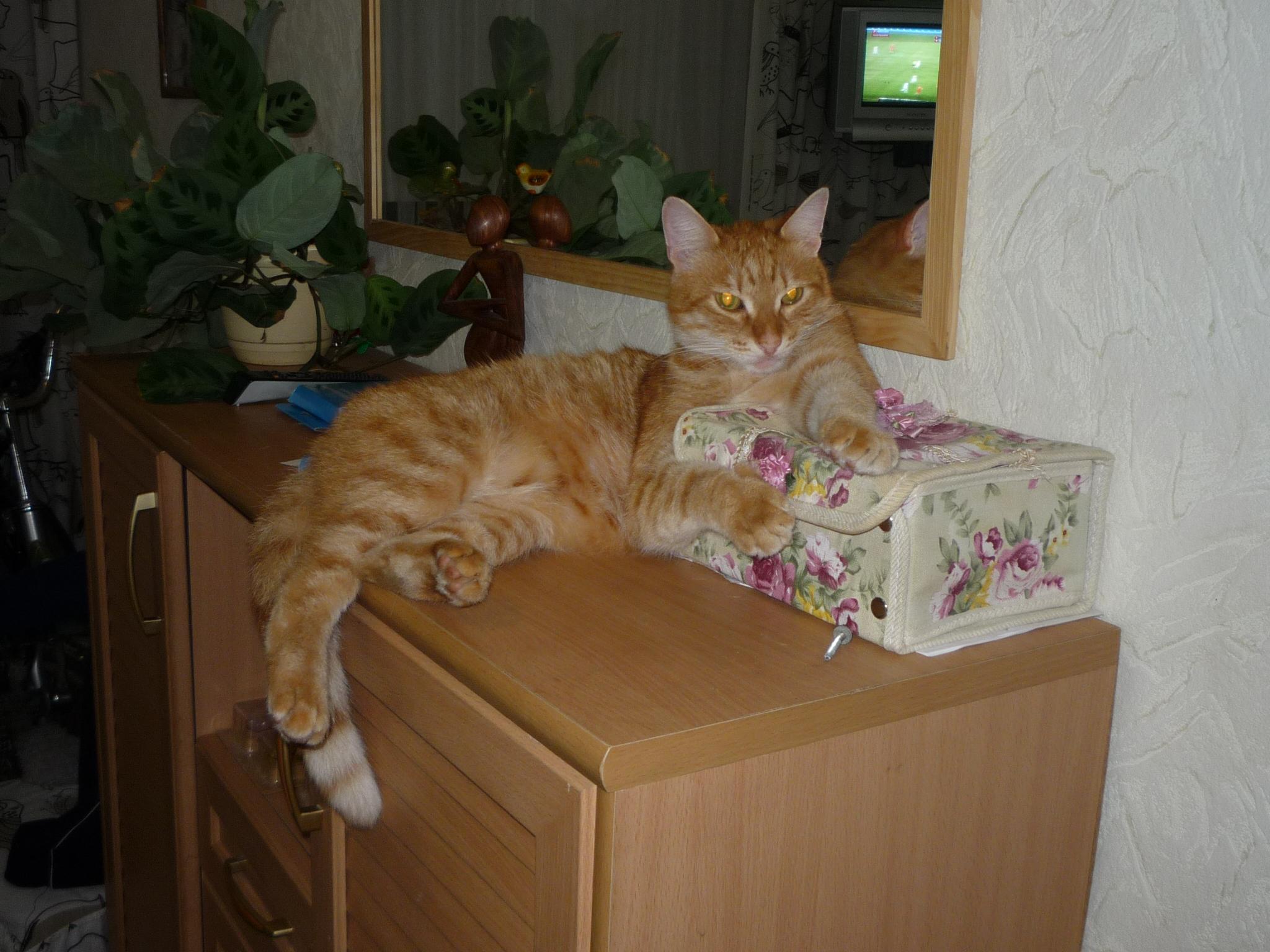 Жил был кот, котоpый жил миллион p...
