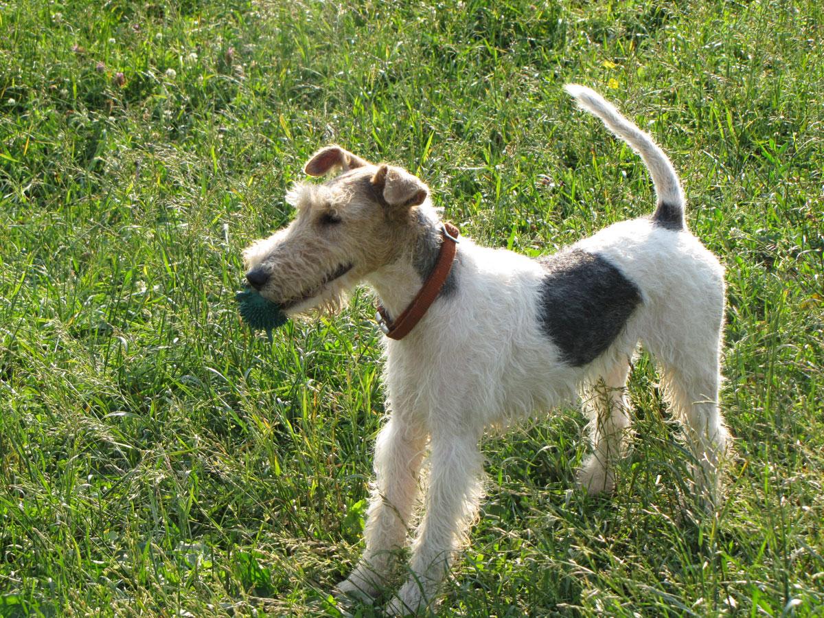 Потерялась собака   24 октября в П...
