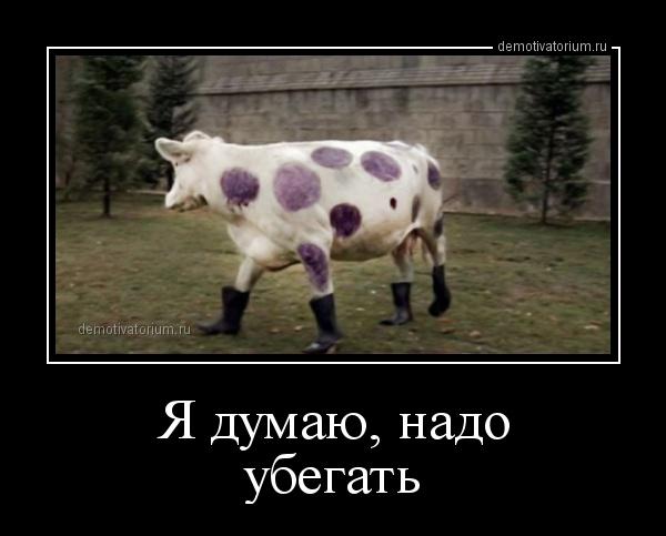 Коровье дефиле на выставке