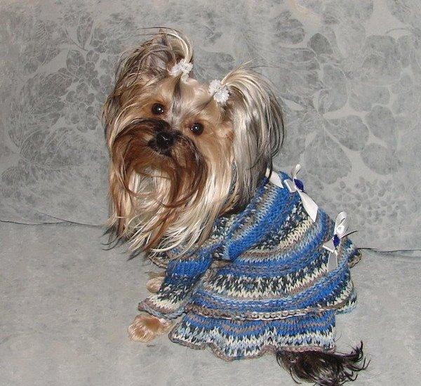 Одежда для собак в интернет ателье...