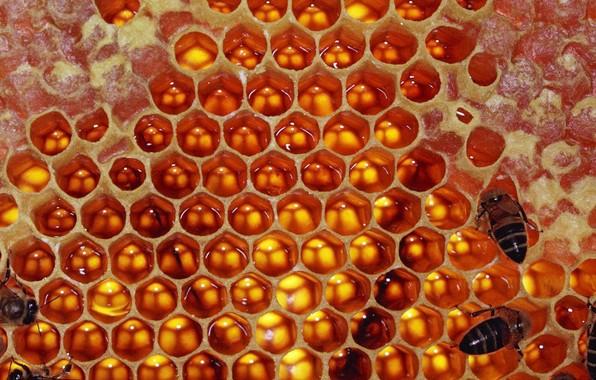 Сбор заказов. Вкуснейший мед из Пу...