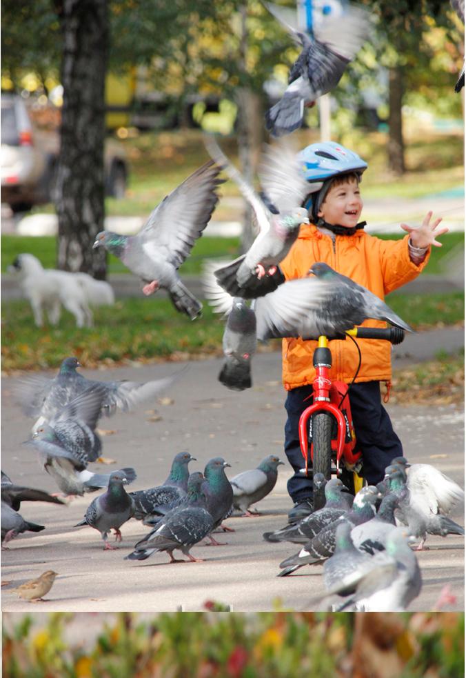 Сбор заказов. Детский транспорт от...
