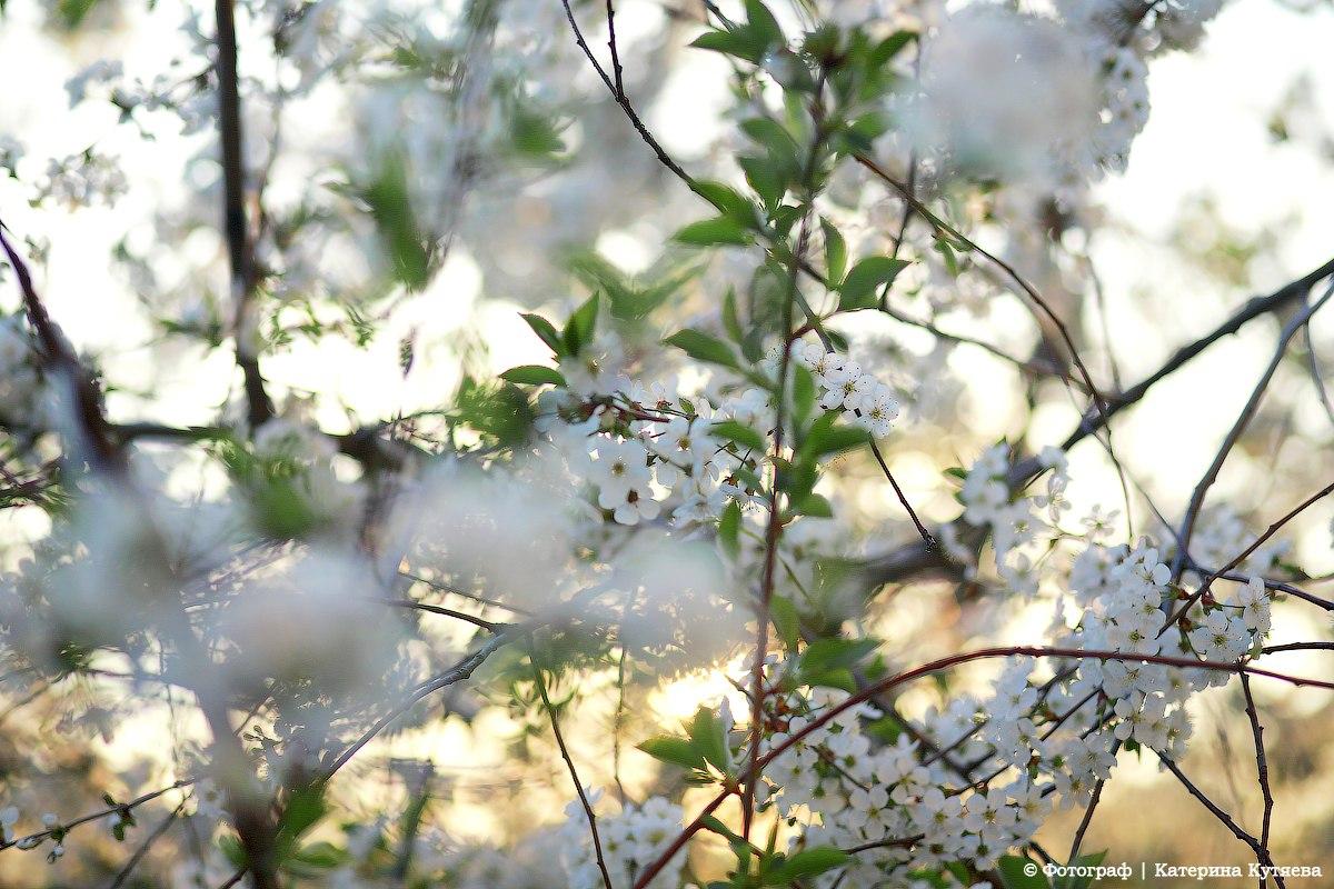 Вот и пришла долгожданная весна, о...