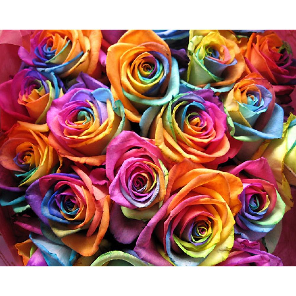 Цветы к 1 сентября   www.nn.ru/com...