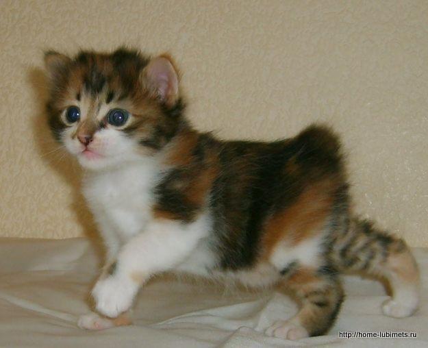 Некрасивый котенок.    Котёнок был...