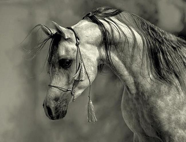 ******  Бездомная лошадь сдыхать н...