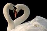 Великое счастье, когда любовь с пе...