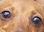 «Это было в третьем классе. У Вани Мелихова появился пёс, звали его Джульбарс, а попросту — Жулька. Молодая дворняга, очень худая, серо-коричневого окраса, боязливая и льстивая до чрезвычайности. Ваня охотно возился с ним, учил командам, бегал то за ним,...