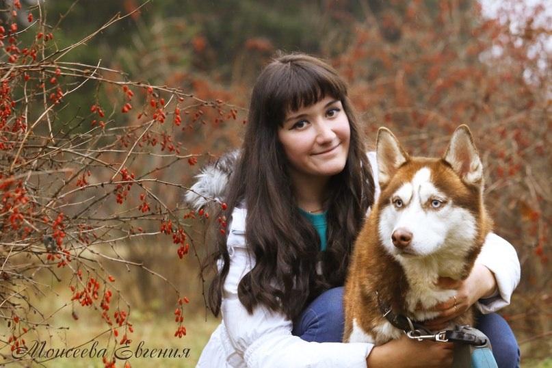 Фотосессии с собаками и лошадьми