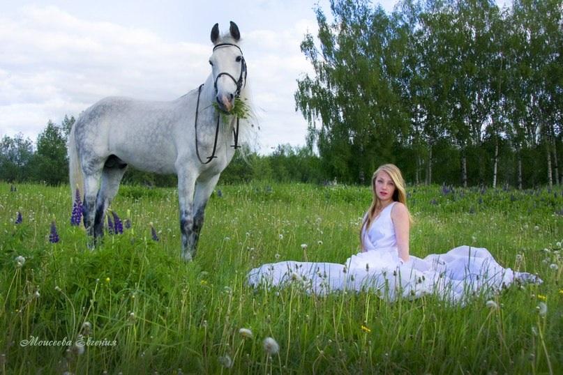 Фотосессии с лошадьми и собаками