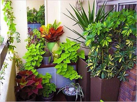 6 растений, которые стоит зааиметь, если в квартире есть курильщик
