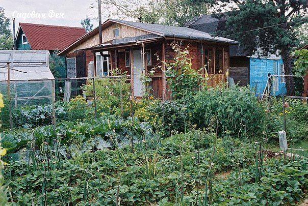 Опыт выращивания и ухода за растениями в огороде