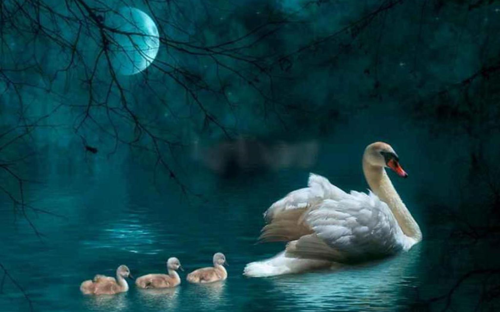 Поздравляю с Днем Матери !! Всех Мамочек, Бабушек и тех, кто в скором времени готовится стать Мамой !!