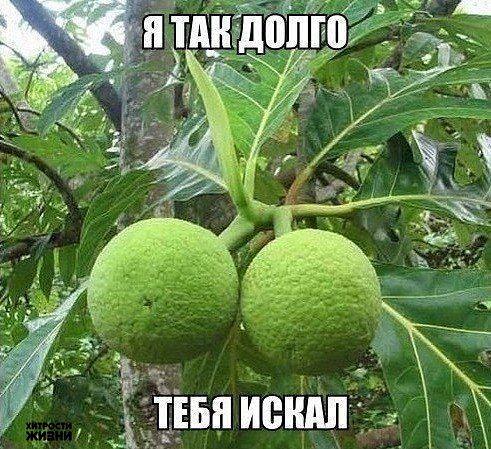 Растение-мечта!