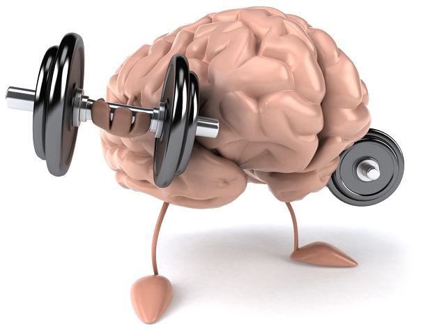 Как на мозг влияет время суток.