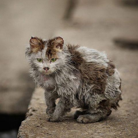 Уродливый кот (до слез!)