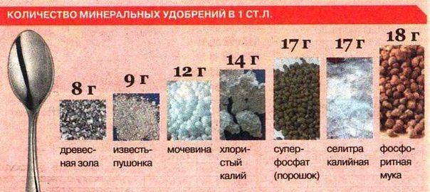 Количество минеральных удобрений в 1 столовой ложке