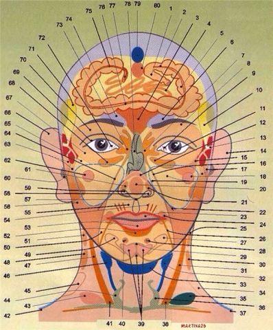 Диагностика здоровья по лицу и шее (часть1)