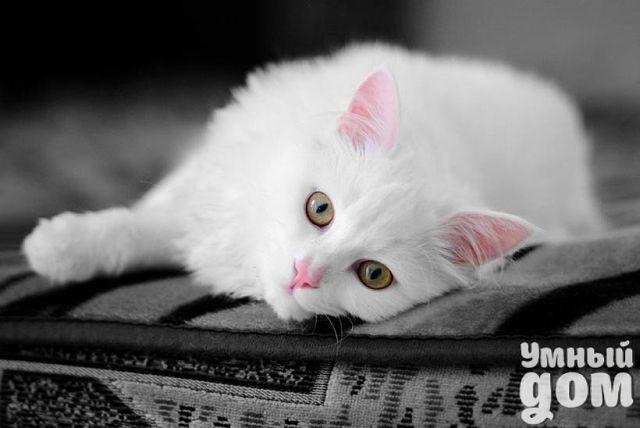 Каким образом кошки помогают человеку