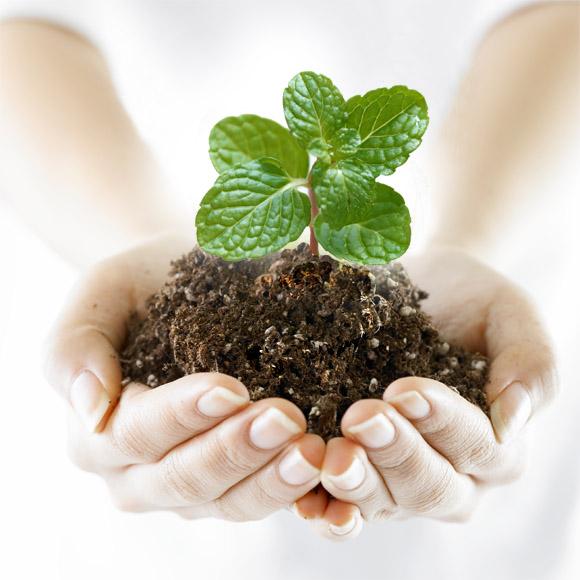 Кормим, Лечим, Защищаем. Подкормки, средства защиты от болезней и вредителей растений.