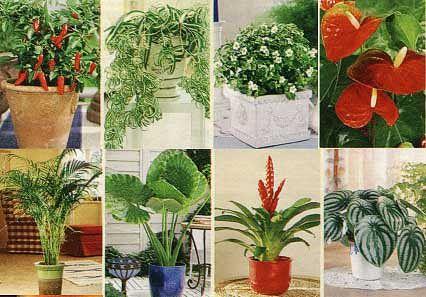 Фен-шуй. Энергетика домашних растений