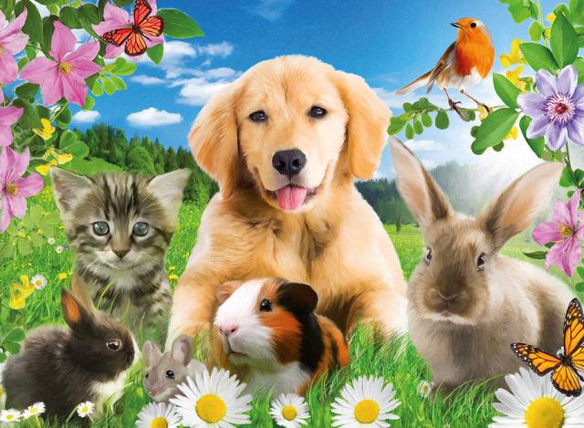 Фэн-шуй домашних животных