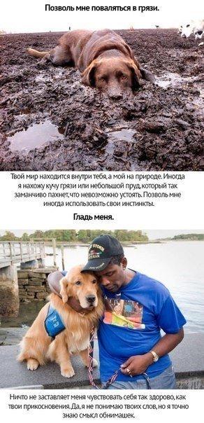 Любите собак