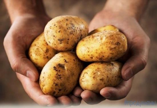 Как картофель завоевал Европу