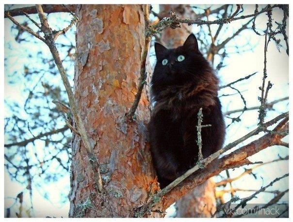 Сегодня услышал, как моя соседка долго уговаривала своего кота слезть с дерева.