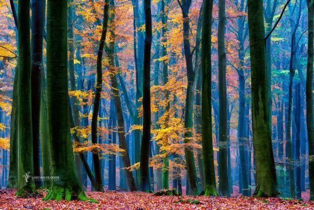 Магия осеннего леса от Ларса Ван де Гоора