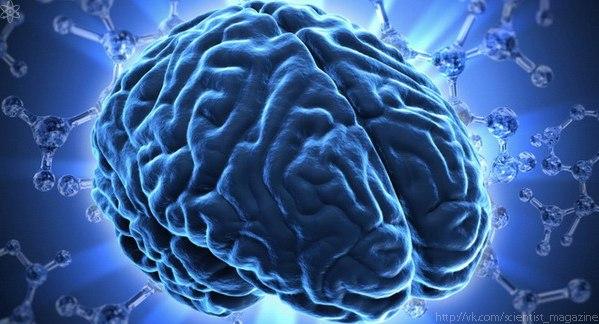 Человеческий мозг способен хранить от 1 до 7 млн. мегабайт информации.