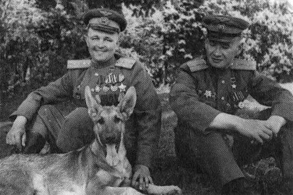 Во время Второй Мировой войны разминировать объекты саперам активно помогали дрессированные собаки
