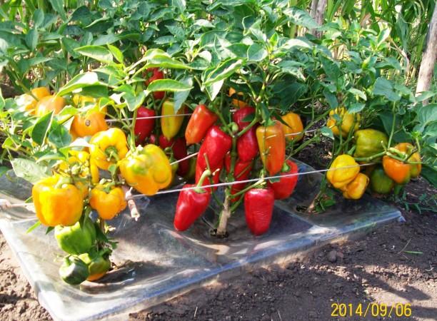 Сбор заказов. Агропанели - завтра нашего огорода! Увеличиваем урожай! Выкуп 2.