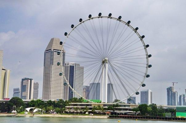 Singapore Flyer на сегодняшний день это самое высокое колесо обозрения его высота составляет 165 метров.