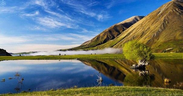 До появления первых поселенцев на территории Новой Зеландии в 13 веке из млекопитающих здесь обитали только тюлени, морские львы и летучие мыши