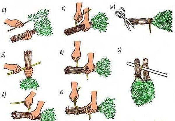 Как и из каких растений вязать веники для бани.