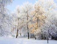 Зима будет холодной, а расходы на топливо существенными