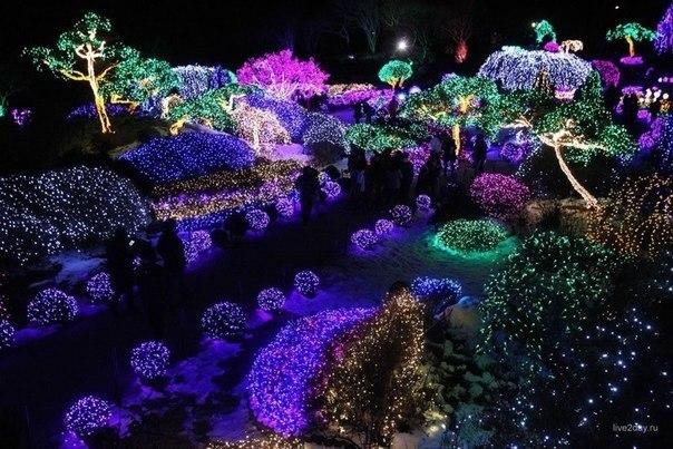 Подсвеченные разным цветом деревья в Саду Утреннего Спокойствия, Капхён, Южная Корея.