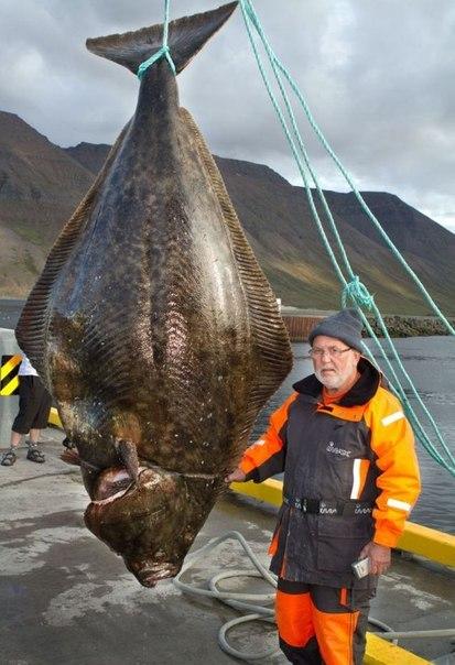 Гюнтеру Хансельну, 70-летнему рыбаку из Германии, не стоит придумывать рассказ о пойманной Вот такой рыбе