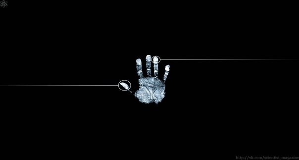 Коала и человек единственные животные в мире, которые имеют отпечатки пальцев