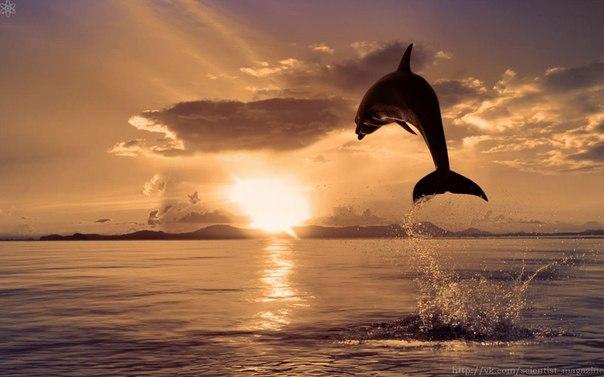Могут ли дельфины разговаривать?