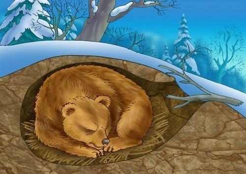 Почему звери впадают в спячку?