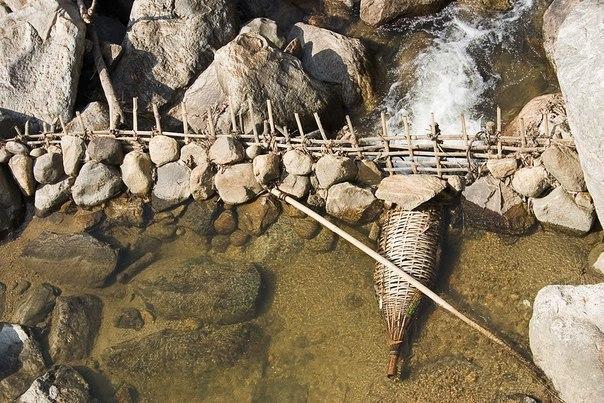 Вьетнамская ловушка для рыбы.