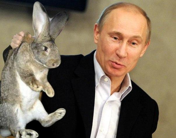 Происхождение кроликов.